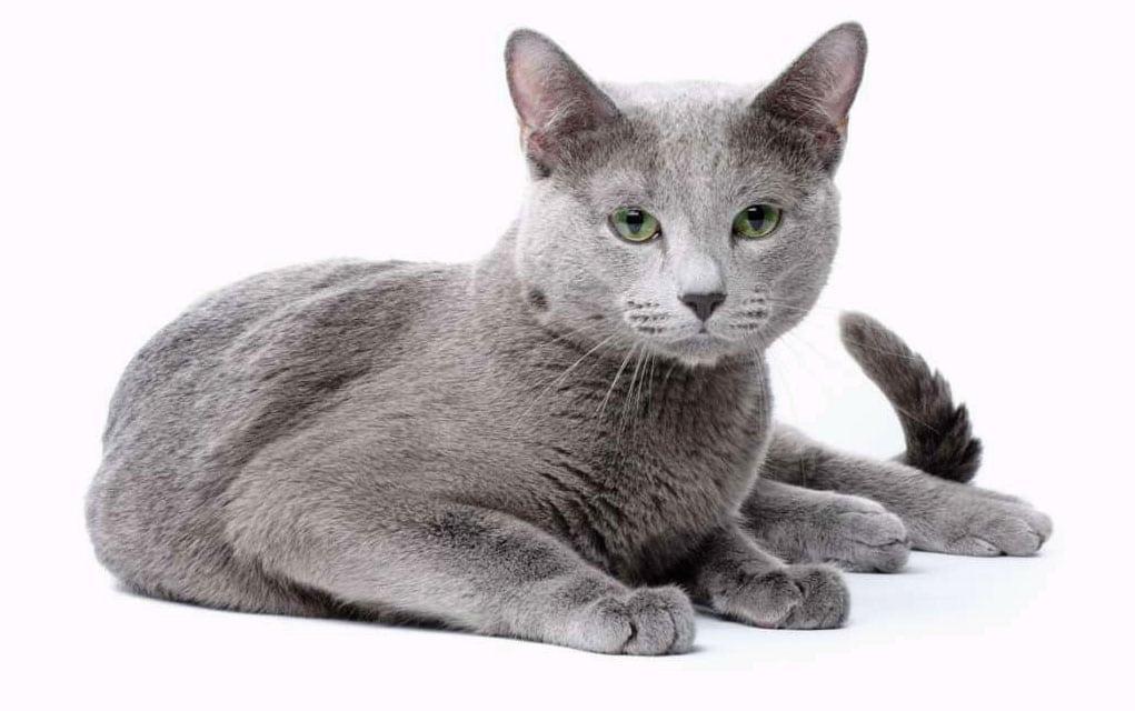 Izuzetno uski video maca