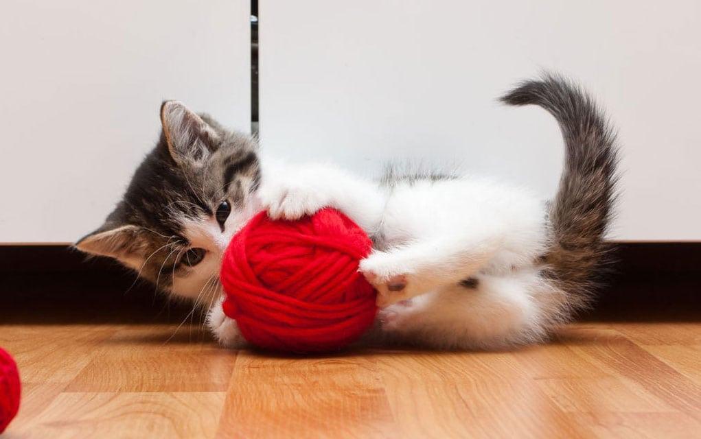 Strano telo kod mačaka