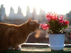 trovanje biljkama petface