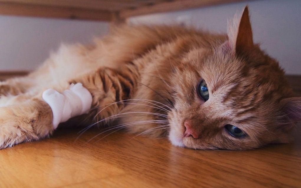 Trovanje kućnom hemijom kod mačaka