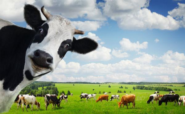 sara kod krave