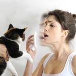 DOKAZANO: Ljudi NE MOGU BITI alergični na mačku!