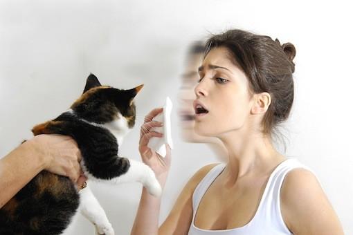 alergični na mačku trainer petface