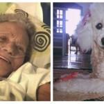 Poslednja želja baka Marije je bila da vidi svog psa. Oni su je ispunili! (VIDEO)