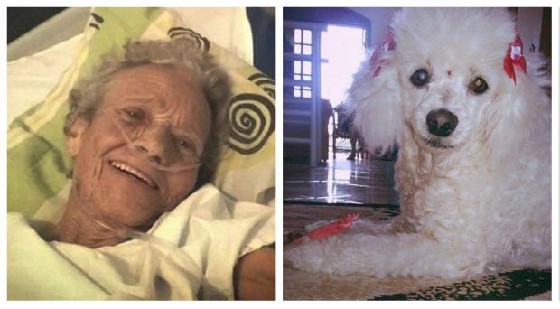 baka i pas petface