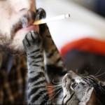 DOKAZANO: Cigarete mogu ubiti mačku!