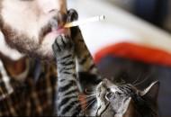 Cigarete petface