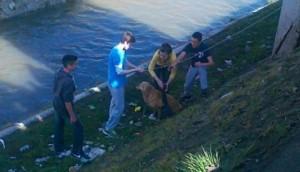 decaci izvukli psa petface