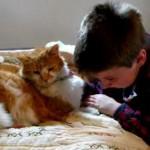 VRLOOO EMOTIVNO: Dečak sa autizmom u suzama, zbog ponovnog susreta sa svojom izgubljenom macom! (VIDEO)