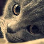 Šta vaša mačka govori o vama?