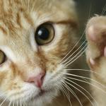 Kako sprečiti mačku da grebe nameštaj?