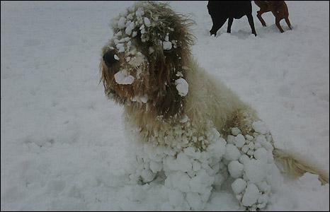 grudvice-snega-na-sapama-psa-petface