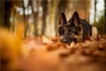 Jesen: Sinonim za linjanje! Kako pomoći ljubimcu?