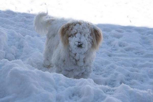 ljubimci-i-sneg-petface
