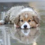 ISTRAŽIVALI SMO: Zašto psi ne vole kišu?!