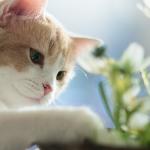 Biljke koje su otrovne za vašu mačku!