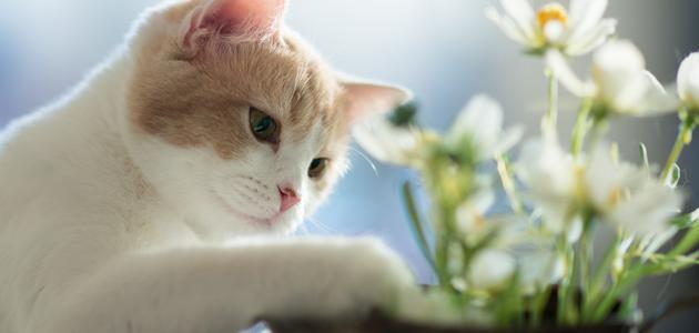 mačke-i-biljke