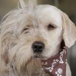 """Kako je """"make over"""" spasio život psu Čarliju! (VIDEO)"""