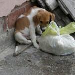 EPILOG SLUČAJA IZ VIŠNJIČKE BANJE: Neodgovorni vlasnici krivi za napade pasa na ljude!