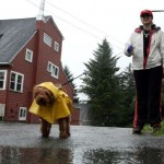 Zašto pas neprijatno miriše nakon šetnje po kiši?