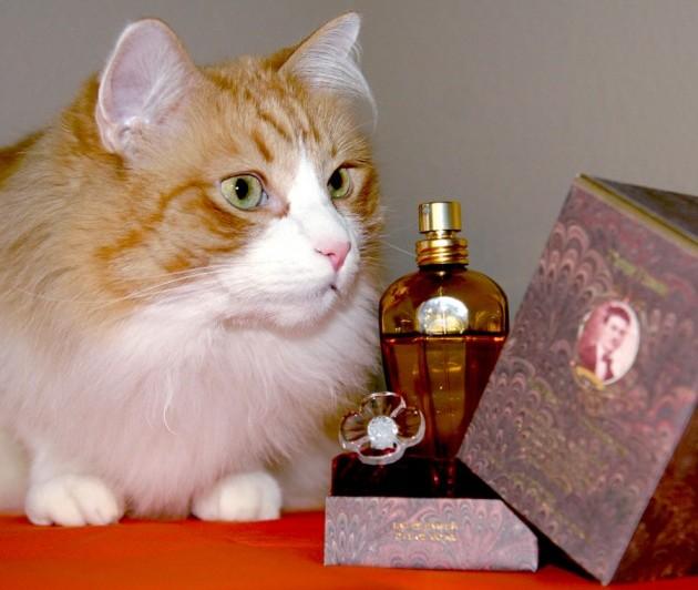 parfemi za macke petface