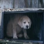 """6 MILIONA PREGLEDA ZA JEDAN DAN: """"Badvajzer""""ovo štene PONOVO rasplakalo svet! (VIDEO)"""
