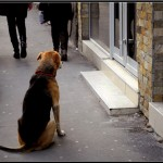PRIČA KOJA JE RASPLAKALA SRBIJU: Pas sa Dorćola BIĆE udomljen!