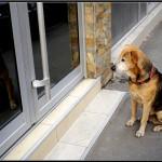 BEOGRAD: Pas čeka preminulu vlasnicu svakog dana na istom mestu!