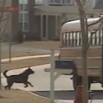 SVE ZA LJUBAV: Pas svakodnevno čeka dečaka iz škole i nosi mu ranac! (VIDEO)