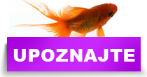 http://petface.net/kategorija/petopedija/akvaristika-petopedija/upoznajte-svet-akvarijuma/