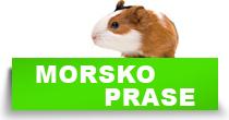 http://petface.net/kategorija/petopedija/glodari-petopedija/morsko-prase/