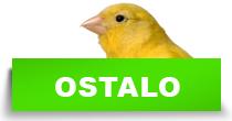 http://petface.net/kategorija/petopedija/ptice-petopedija/ostale-ptice/