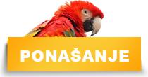 http://petface.net/kategorija/petopedija/ptice-petopedija/papagaji/ponasanje-papagaji/