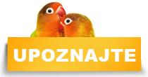 http://petface.net/kategorija/petopedija/ptice-petopedija/papagaji/upoznajte-papagaje/