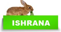 http://petface.net/kategorija/petopedija/glodari-petopedija/kunic/ishrana-kunic/