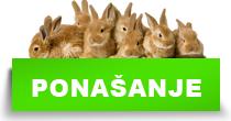 http://petface.net/kategorija/petopedija/glodari-petopedija/kunic/ponasanje-kunic/