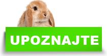 http://petface.net/kategorija/petopedija/glodari-petopedija/kunic/upoznajte-kunice/