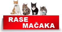 http://petface.net/kategorija/petopedija/macke-petopedija/rase-macaka/
