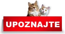 http://petface.net/kategorija/petopedija/macke-petopedija/upoznajte-macke/