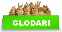 http://petface.net/kategorija/petopedija/glodari-petopedija/