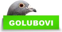 http://petface.net/kategorija/petopedija/ptice-petopedija/golubovi/