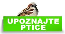 http://petface.net/kategorija/petopedija/ptice-petopedija/upoznajte-ptice/
