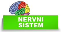 http://petface.net/kategorija/petopedija/macke-petopedija/zdravlje-macke-petopedija/bolesti-nervnog-sistema/
