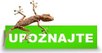 http://petface.net/kategorija/petopedija/egzoticne-zivotinje/upoznajte-egzoticne-zivotinje/