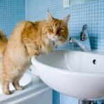 Kakva je jutarnja rutina vase mace?