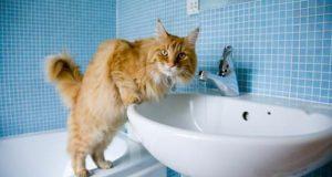 pranje zuba macaka petface
