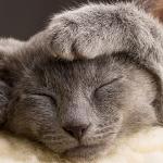 Šta je zapravo predenje mačaka?