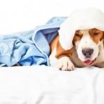 ISTINA JE: I psi se mogu prehladiti!