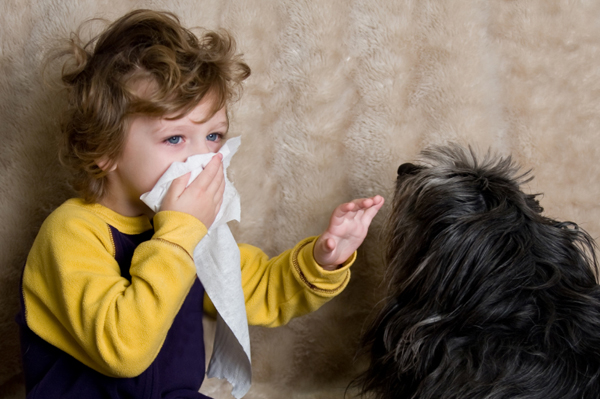 alergičan petface