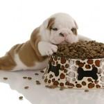 DOKAZANO: Psi razlikuju slano, gorko i slatko!
